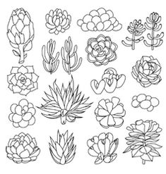 Zentangle, Succulents Drawing, Succulents Garden, Planner Doodles, Drawing Sketches, Drawings, Sketching, Bleach Art, Floral Drawing