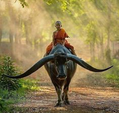 Thailand culture 🇹🇭 Photo by Nature Animals, Animals And Pets, Cute Animals, Baby Animals, Nature Nature, Wild Animals, Science Nature, Beautiful Creatures, Animals Beautiful