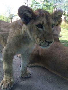 May 16 at the Zoo