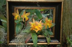Orchids are framed as a piece of art in the Orchid Conservatory at Daniel Stowe Botanical Garden
