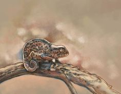 Chameleon Art Print, Africa Art Series, Digital Art - Trapsuutjie by Ramona MacDonald, South African/American Artist