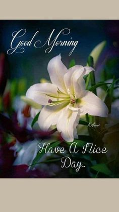 Sweet Good Morning Images, Good Morning Friends Images, Latest Good Morning Images, Good Morning Beautiful Pictures, Good Morning Beautiful Flowers, Good Morning Nature, Good Morning Roses, Good Morning Images Flowers, Good Morning Beautiful Quotes