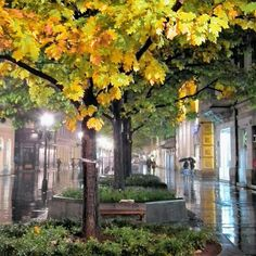 Autumn leaves in Knez