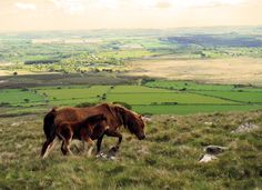 Wild Ponies on the Preseli Hills Ponies, Mountains, Nature, Travel, Animals, Naturaleza, Viajes, Animales, Animaux