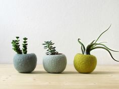 Felt succulent planter / felted pod / Succulent terrarium / Green felt vases / felt bowl / winter decor by theYarnKitchen on Etsy
