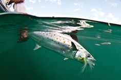 fly fishing clouser minnow