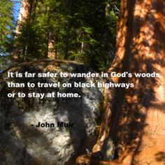 114 Best Champions Of Nature Images Words Frases John Muir Quotes