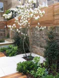 Cool contemporary classic 13 copyright Charlotte Rowe Garden Design