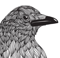 crow by nedi sopian, via Behance