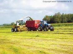 Afbeeldingsresultaat voor boesveld en zn