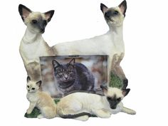 EandS Pets Large Cat Frames ** Details can be found by clicking on the image. (This is an affiliate link and I receive a commission for the sales) Pet Memorial Stones, Memorial Urns, Cat Memorial, Mom Died, Cute Frames, Pets 3, Gifts For Pet Lovers, Siamese Cats, Us Images