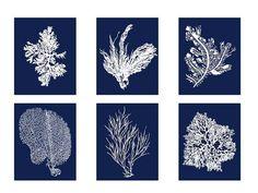 Coral Prints, White on Blue Sea Coral Print Set of FOUR 8x10, Coral Wall Art, Six Coral Prints, Sealife print Blue 8x10 Prints