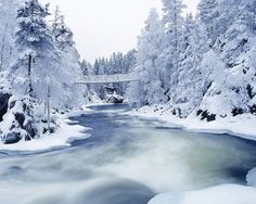 Google Image Result for http://www.seven12magazine.com/wp-content/uploads/Winter_wallpapers_Winter_Forest_019431_.jpg