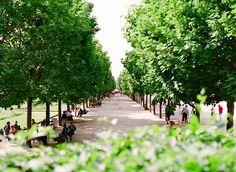   ♕   Tuileries Garden - Paris   by © Kallie Brynn   via...