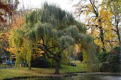 #nature #arbre #paysage