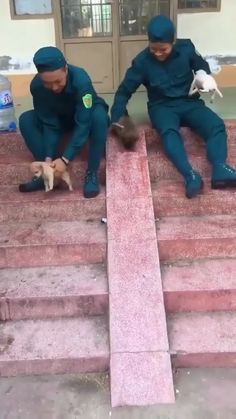 The puppies are so small I'm amazed they climb the steps so well. Cute Funny Animals, Cute Baby Animals, Funny Dogs, Animals And Pets, Cute Cats, Cute Animal Videos, Funny Animal Pictures, Cute Gif, Funny Cute