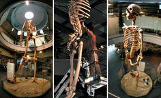 Sete vezes maior que um ser humano moderno: Equador mostra pela primeira vez esqueletos de uma antiga raça de gigante ao mundo! ~ Sempre Questione - Notícias alternativas, ufologia, ciência e mais