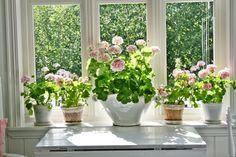 Jeg er vel kansje ikke den som bruker mest rosa i hjemmet,men finner jeg blomster i rosa...er jeg fortapt:)  Bli med på en reise i ROSA ...