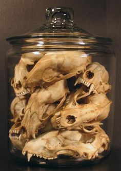 Jar full of animal skulls - very curious!