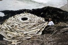 Rivers and Tides, Andy Goldsworthy