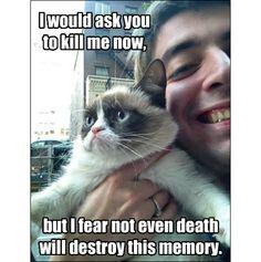 funni stuff, funni chiz, grumpi cat, grumpycat, tardcut cat, kill, funni funni, babi cat, grumpy cats