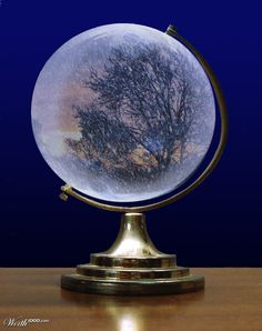 Such a cool snow globe..