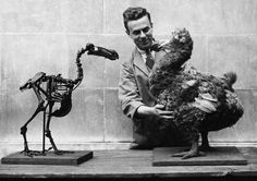 Rescuing the Diorama From the Fate of the Dodo; In New Appreciation of Old Technique, Museum Remakes the Sea on Dry Land - welshmusuem1938.jpg (613×433)