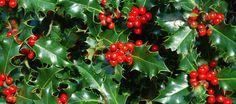 PRODUCTO: Es un artículo sobre las tradiciones familiares de la Navidad en España.