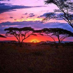 Serengeti, Tanzania via @squirrelynn