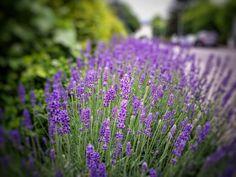 DanaMichele ♡ #photography #Flowers