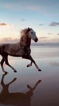 Cute Horses, Pretty Horses, Horse Love, Cute Wild Animals, Cute Funny Animals, Animals And Pets, Beautiful Creatures, Animals Beautiful, Amazing Beasts