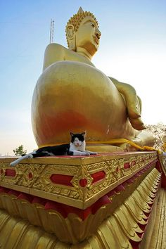 Pattaya , Thailand - Cats and cool statues all in one pic. Does it get any better??!