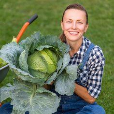 Obyčajná sóda bikarbóna je poklad pre každého záhradkára: 1 balík vystačí na celú sezónu, ten účinok je na nezaplatenie! Cabbage, Vegetables, Gardening, Garten, Vegetable Recipes, Cabbages, Lawn And Garden, Collard Greens, Horticulture