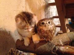 かわいい動物 - 全333枚 Twitterで話題の人気画像まとめ