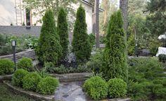 Home And Garden, Plants, Garden, Tree, Outdoor, Outdoor Gardens, Gardenista, Conifers, Landscape