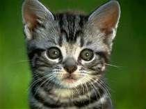 chats - Résultats Yahoo France de la recherche d'images