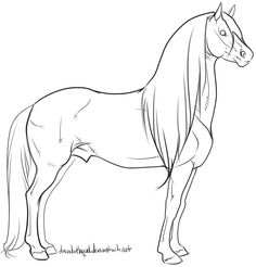 Warmblood stallion Lineart by AmandaRaquel Horse Drawings, Art Drawings Sketches, Animal Drawings, Horse Coloring Pages, Colouring Pages, Horse Animation, Animal Stencil, Horse Sketch, Art Painting Gallery