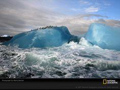 写真:青氷の氷山のペンギン