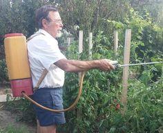 Hells Kitchen, Vegetable Garden Design, Pattern Drawing, Photo S, Lush, Planting, Gardening, Doodles, Travel Hacks