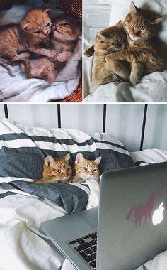 Chats trop mignons dans un lit qui regardent Netflix