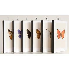 Vlinder op blok | Hagedornhagen