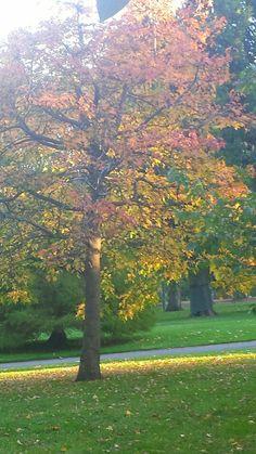 Autumn brings colour in Fitzroy garden, Melbourne Melbourne, Bring It On, Leaves, Autumn, Colour, Brown, Garden, Nature, Plants