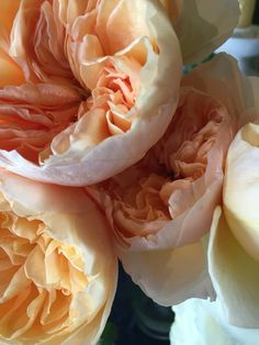 Beautiful old fashion roses!