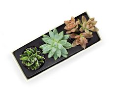 Fresh succulents in a planter gift box. Eco friendly. Long lasting plants. Nationwide Shipping. Customize with a unique cover sleeve.