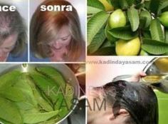 Why Guava Leaves Help Hair Loss?Guava Leaves Can Stop Your Hair Loss and Make It Grow Like Crazy!Guava fruit and especially its leaves are considered to be New Hair Growth, Healthy Hair Growth, Stop Hair Loss, Prevent Hair Loss, Guava Benefits, Health Benefits, Health Tips, Guava Leaves, Hair Loss Women