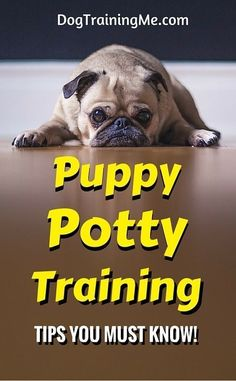Puppy potty training tips that will end your frustration and your ruined carpets. Find out how to potty train your puppy and the one crucial change you must make before progress is made! Read the full list of puppy potty training tips in our article now. #puppytraining #puppypottytraining #dogtraining