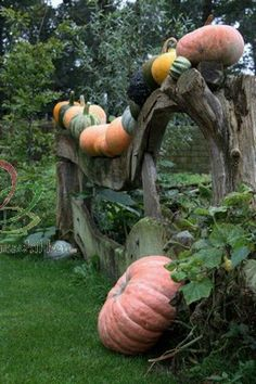fall harvest of so many lovely kinds of squash & pumpkin.  Love