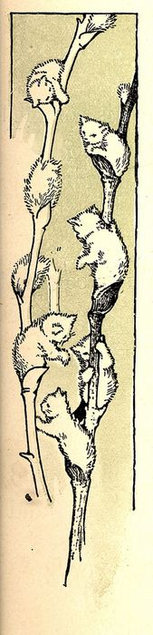 Pussy Willow~ Salix spp.- symbol of a mother's love, friendship~. 'Pussywillows' by Margaret Ely Webb.