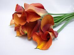 Flower Availability @ Bunches for Africa Western Cape (Pty) Ltd Buy Flowers Online, Wedding Consultant, Cut Flowers, South Africa, Cape, Succulents, Fresh, Plants, Decor
