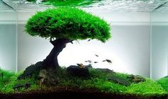 General information about Planted Aquariums
